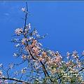 美人樹(花)-2016-09-04.jpg