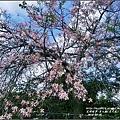 美人樹(花)-2016-09-19.jpg