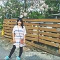 美人樹(花)-2016-09-20.jpg