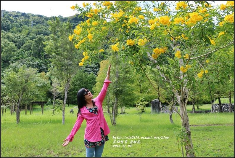 黃鐘花-2016-11-05.jpg