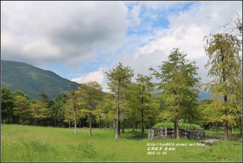 落羽松-2016-11-02.jpg