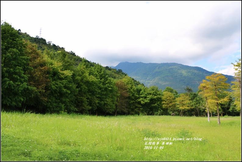 落羽松-2016-11-03.jpg