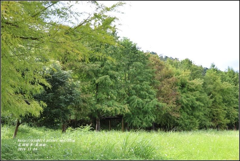 落羽松-2016-11-05.jpg