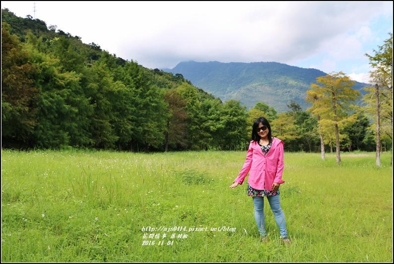 落羽松-2016-11-06.jpg