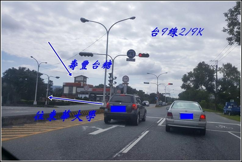 鈺展苗圃落羽松-2016-11-31.jpg