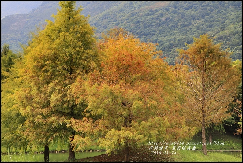 葛莉絲莊園落羽松-2016-11-11.jpg