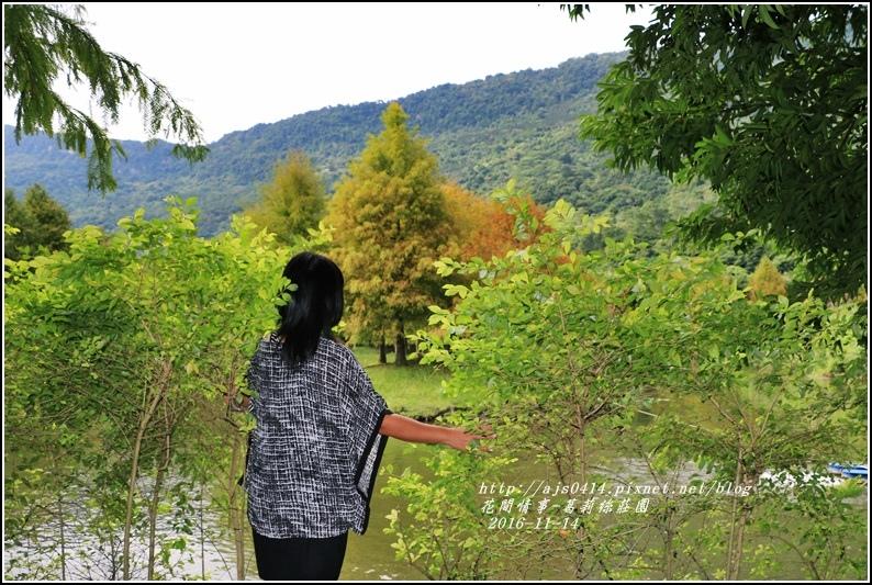 葛莉絲莊園落羽松-2016-11-17.jpg