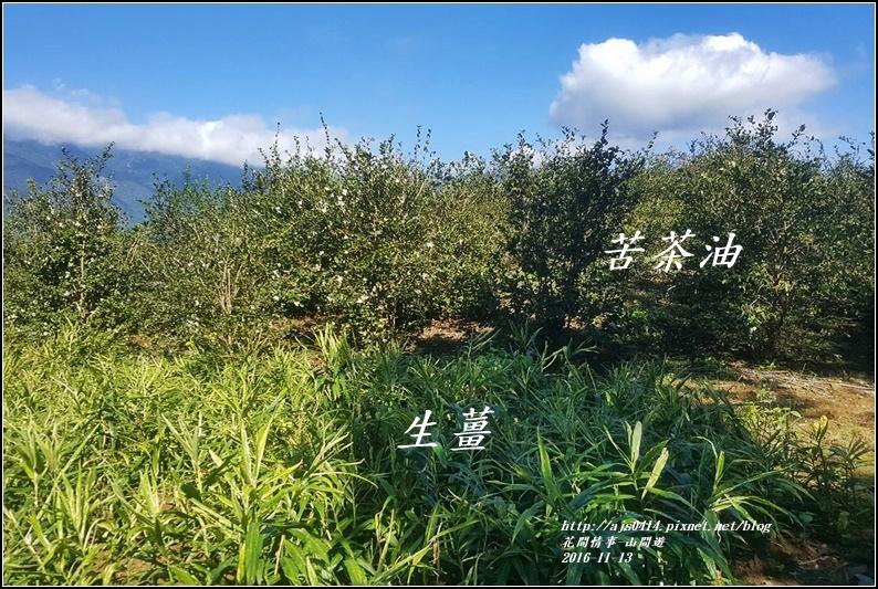 山間遊-2016-11-05.jpg