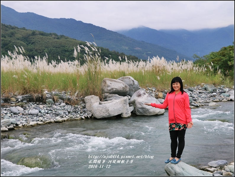 甜根子草(芒花)-2016-11-09.jpg