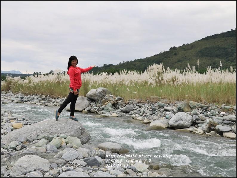 甜根子草(芒花)-2016-11-12.jpg