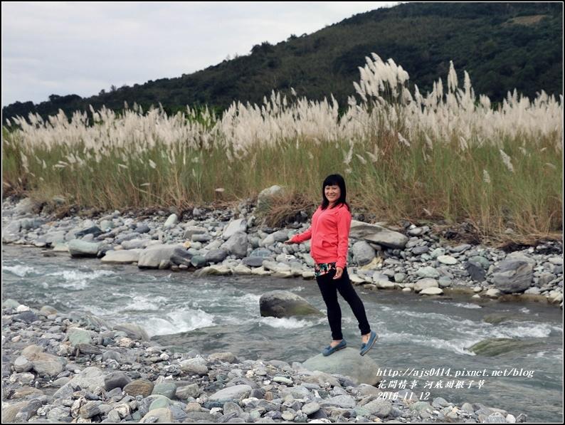 甜根子草(芒花)-2016-11-17.jpg