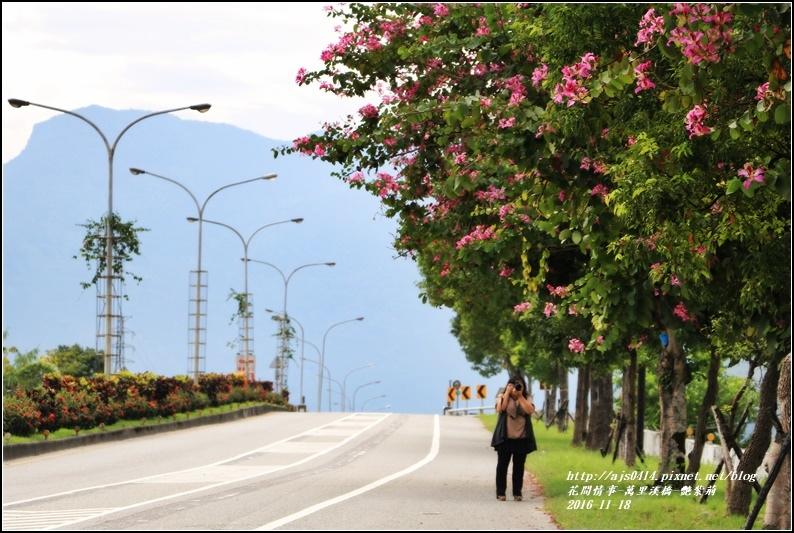 萬里溪橋(艷紫荊)-2016-11-06.jpg