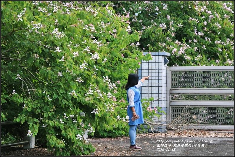 鳳林變電所(洋紫荊)-2016-11-22.jpg