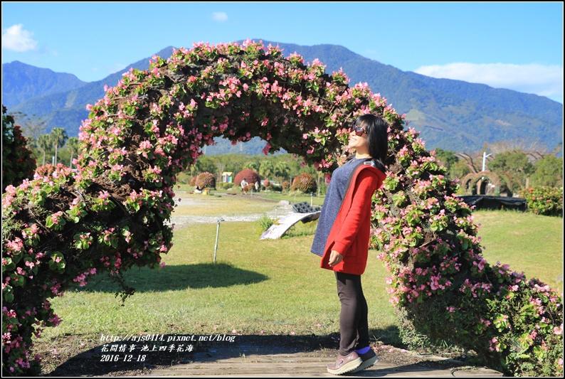 池上四季花海-2016-12-20.jpg