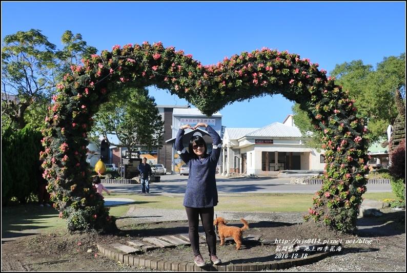 池上四季花海-2016-12-26.jpg