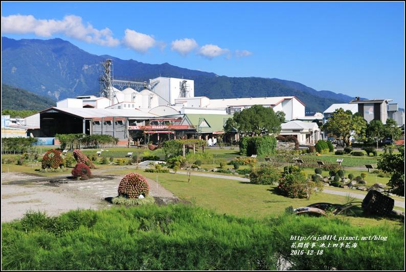 池上四季花海-2016-12-31.jpg