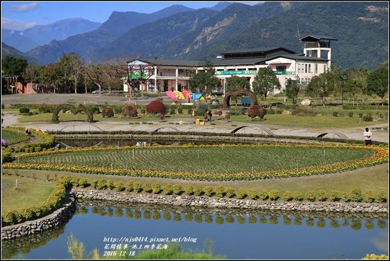 池上四季花海-2016-12-34.jpg