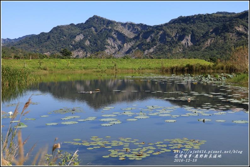 鹿野新良濕地-2016-12-10.jpg