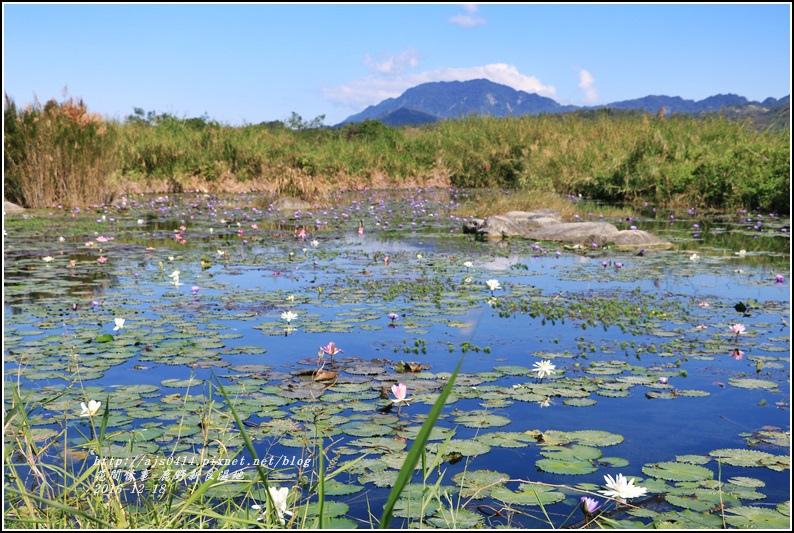 鹿野新良濕地-2016-12-14.jpg