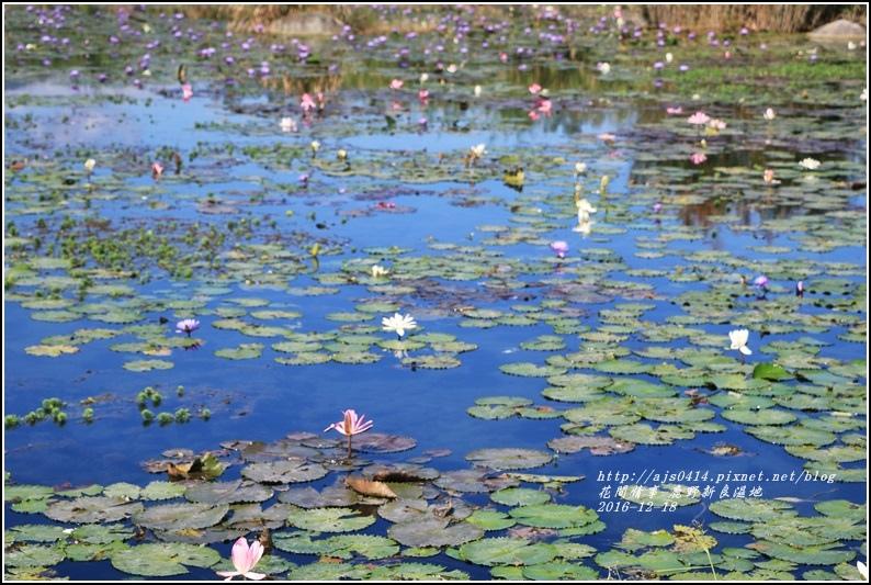 鹿野新良濕地-2016-12-15.jpg