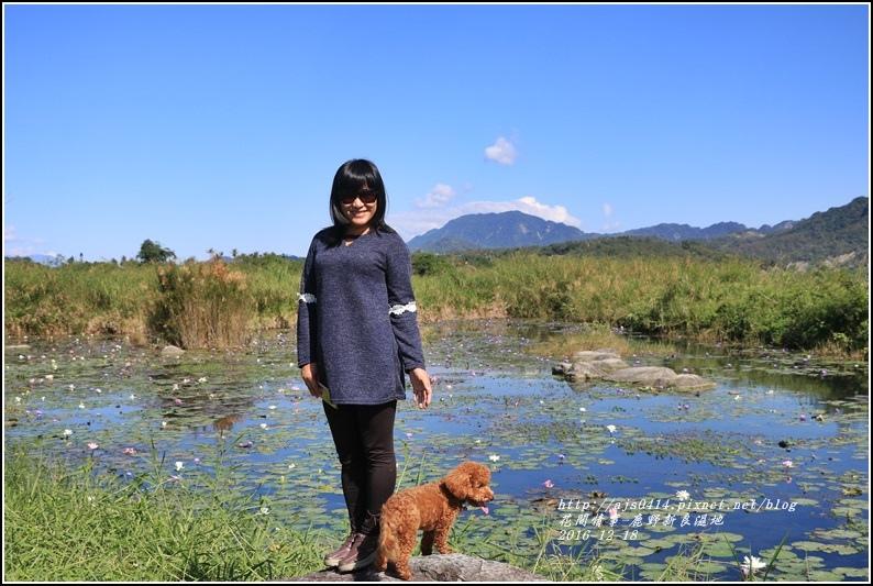 鹿野新良濕地-2016-12-19.jpg