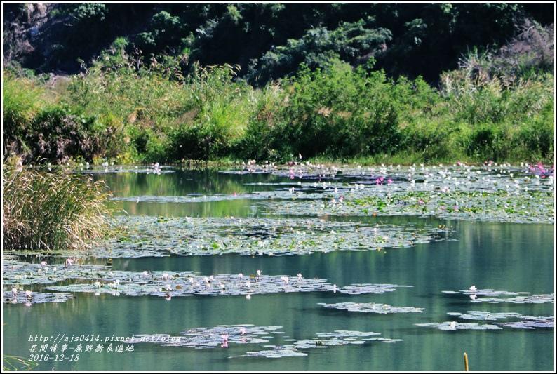 鹿野新良濕地-2016-12-25.jpg