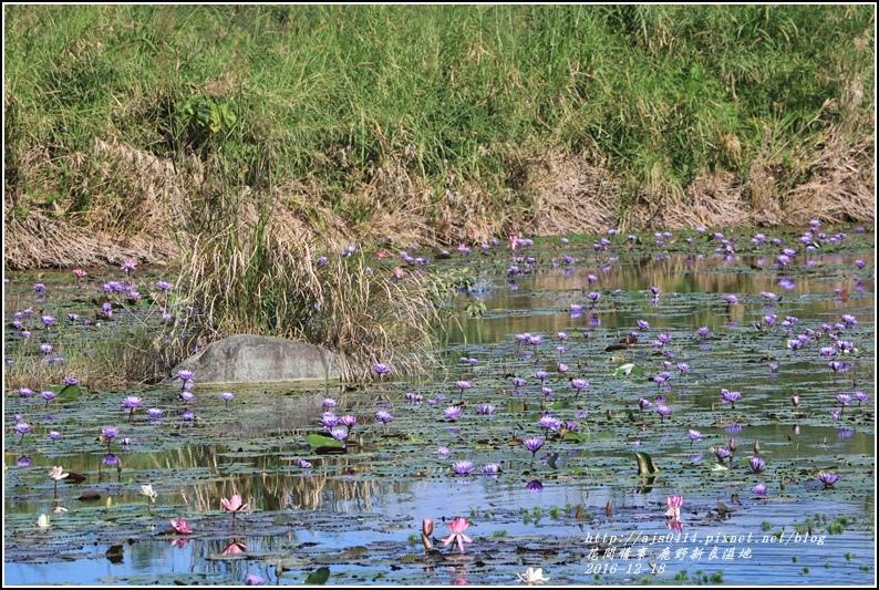 鹿野新良濕地-2016-12-30.jpg