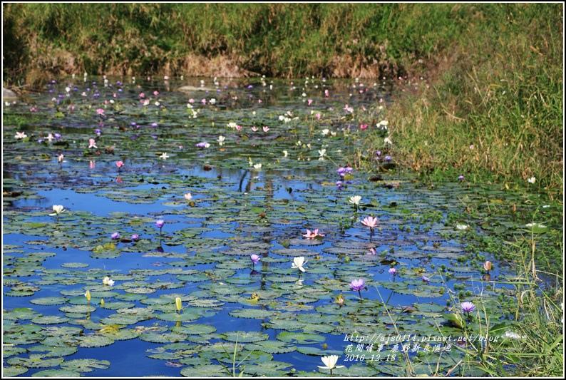 鹿野新良濕地-2016-12-32.jpg