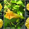 木玫瑰.jpg