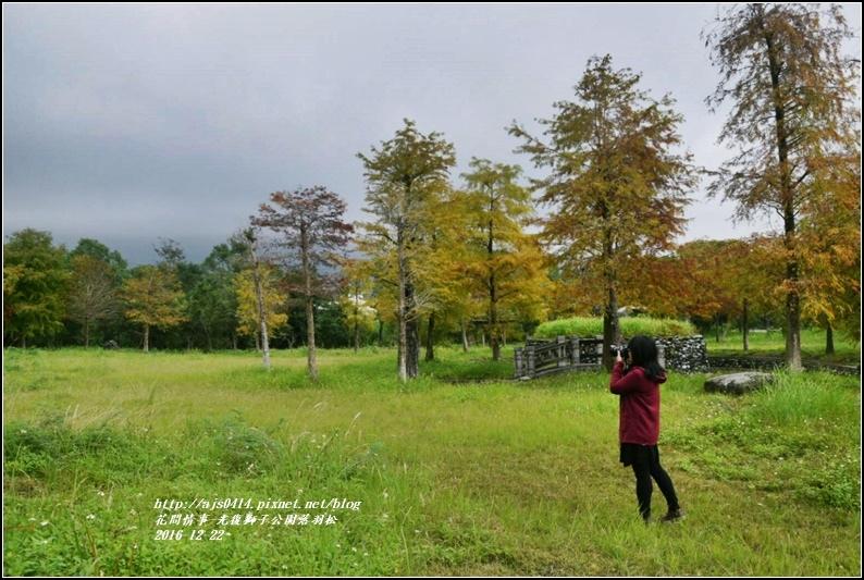 光復獅子公園落羽松-2016-12-09.jpg