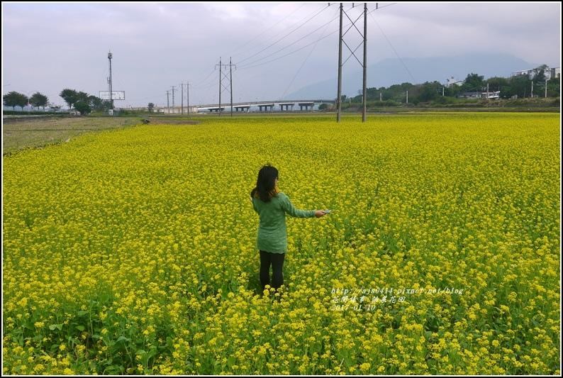 富里油菜花花田-2017-01-04.jpg