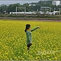 富里油菜花花田-2017-01-06.jpg