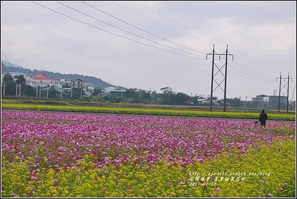 富里油菜花花田-2017-01-11.jpg