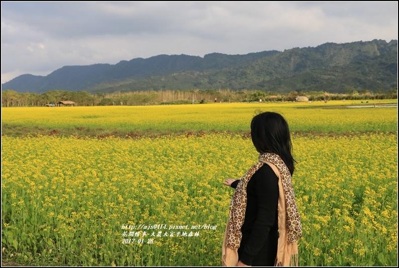 大農大富平地森林-2017-01-21.jpg