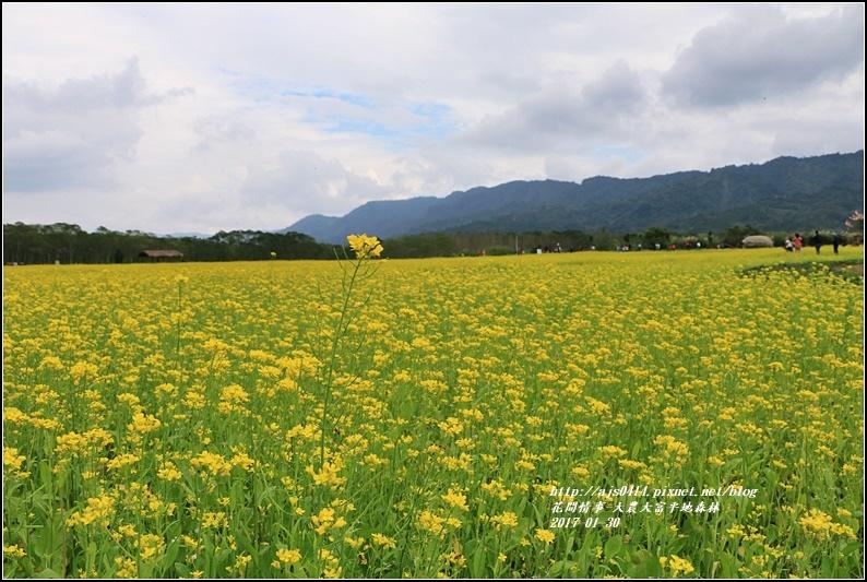 大農大富平地森林-2017-01-77.jpg