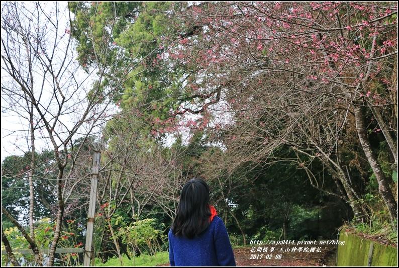 玉山神學院櫻花-2017-01-03.jpg