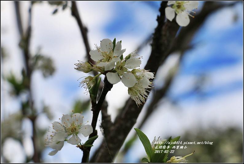 西寶國小-2017-02-04.jpg