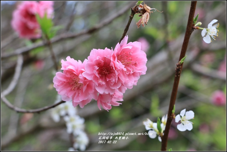 西寶國小-2017-02-07.jpg