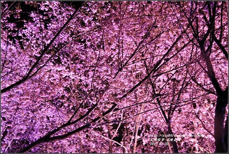 武陵農場夜櫻-2017-02-01.jpg
