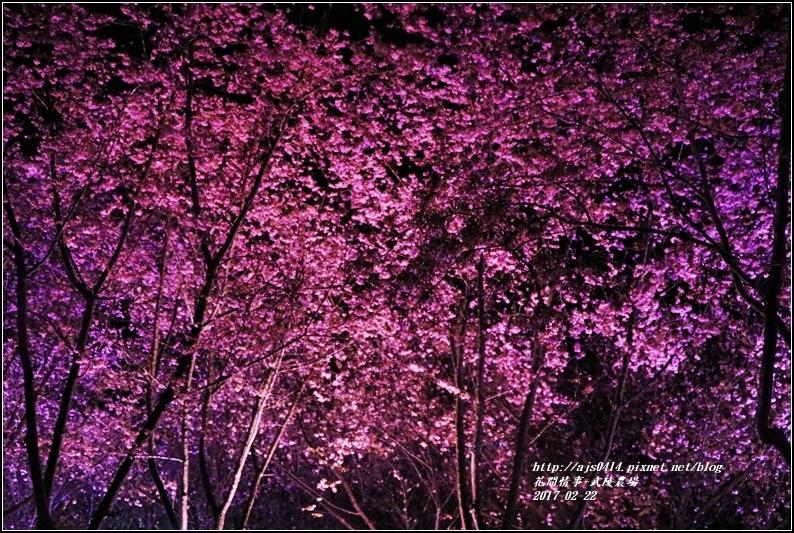 武陵農場夜櫻-2017-02-02.jpg