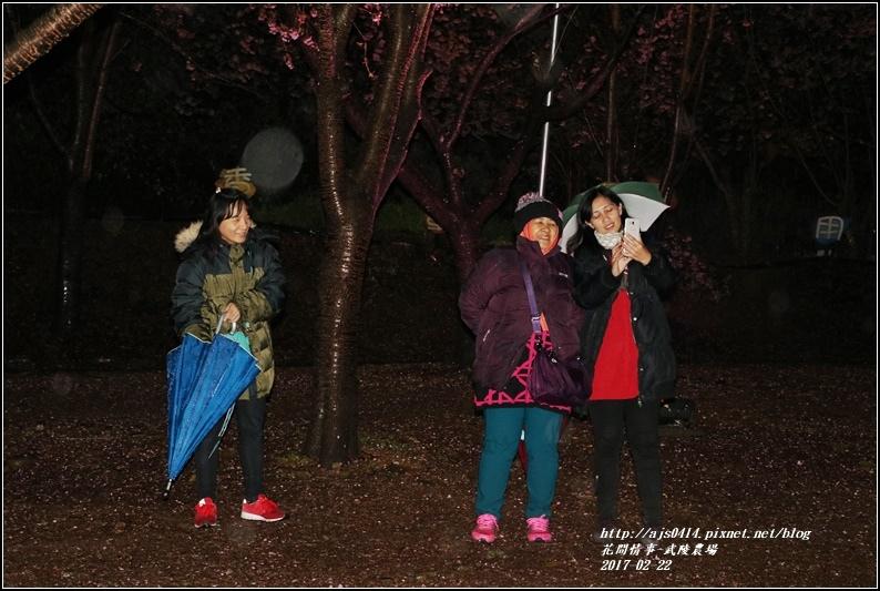 武陵農場夜櫻-2017-02-03.jpg