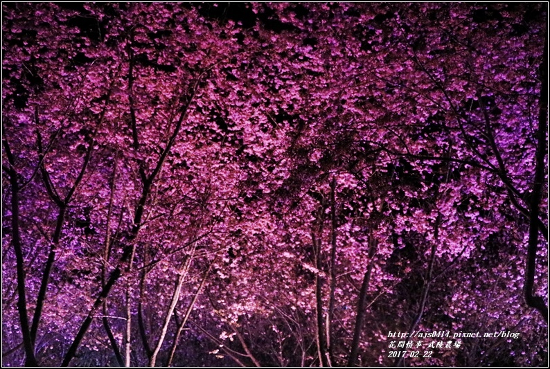武陵農場夜櫻-2017-02-07.jpg
