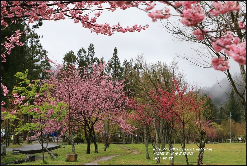武陵農場營區-2017-02-03.jpg