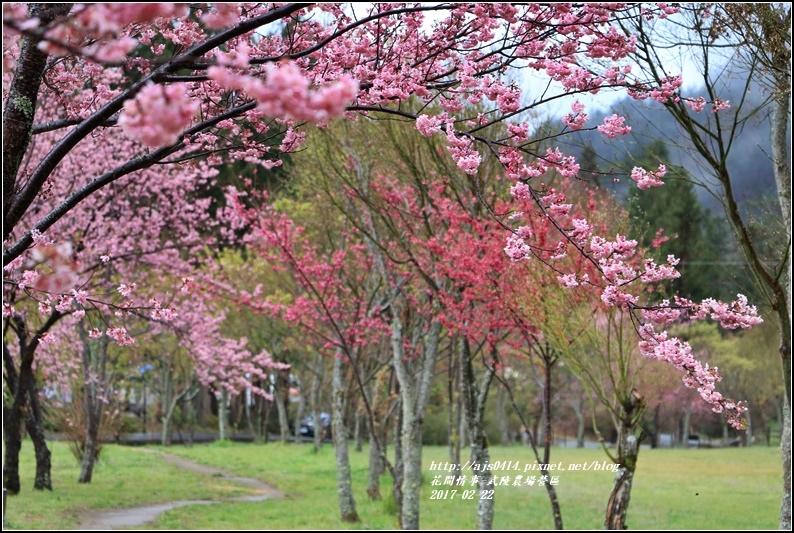 武陵農場營區-2017-02-06.jpg