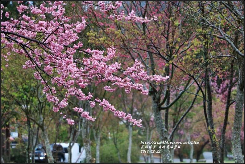 武陵農場營區-2017-02-09.jpg
