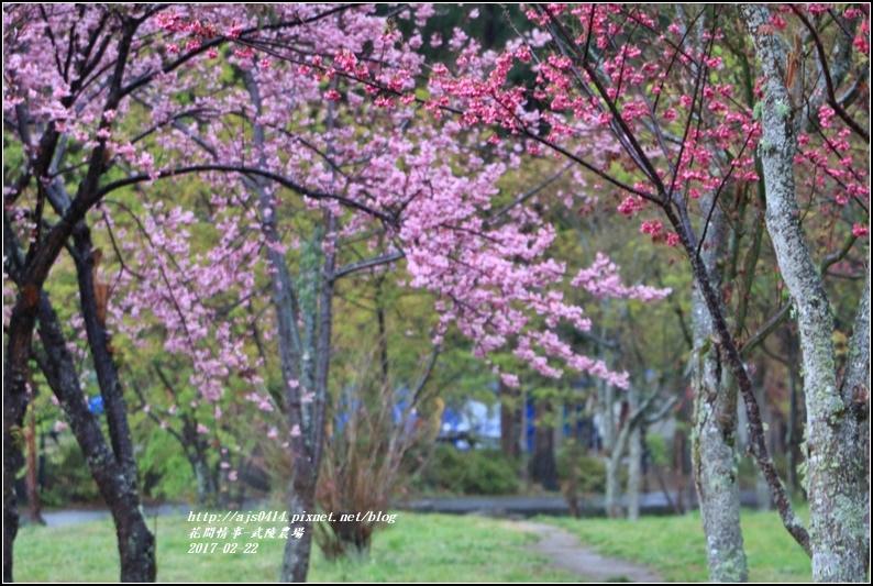 武陵農場營區-2017-02-18.jpg