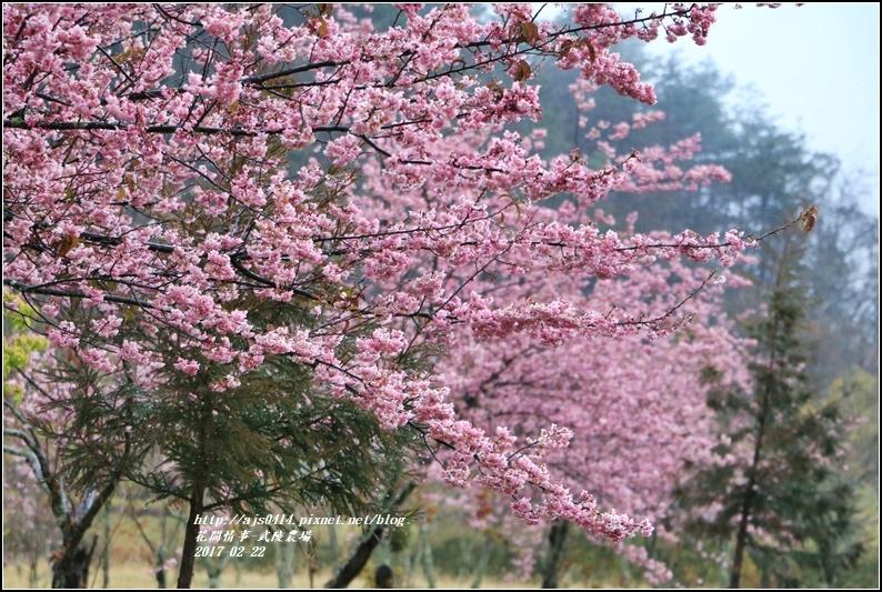 武陵農場營區-2017-02-20.jpg