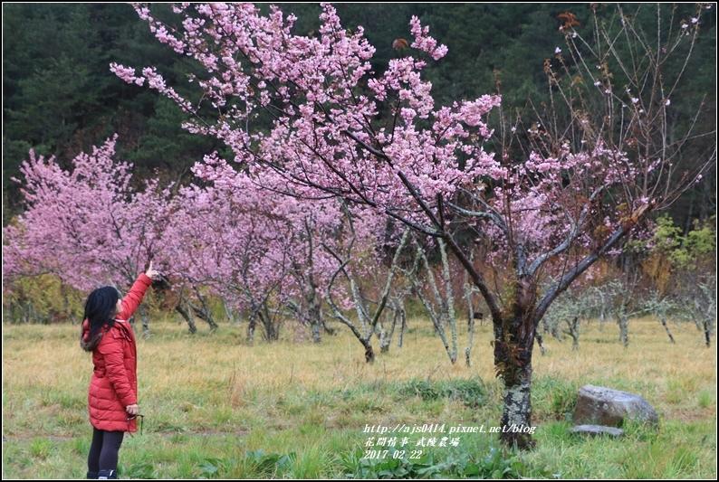 武陵農場營區-2017-02-39.jpg