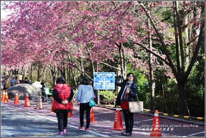 武陵農場巡櫻-2017-02-25.jpg