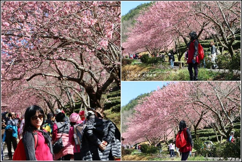 武陵農場巡櫻-2017-02-33.jpg